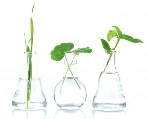 Brevetti-Novità vegetali