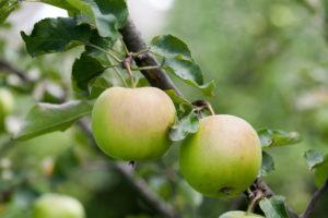 tutela novità vegetali