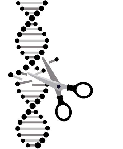 CRISPR Patent